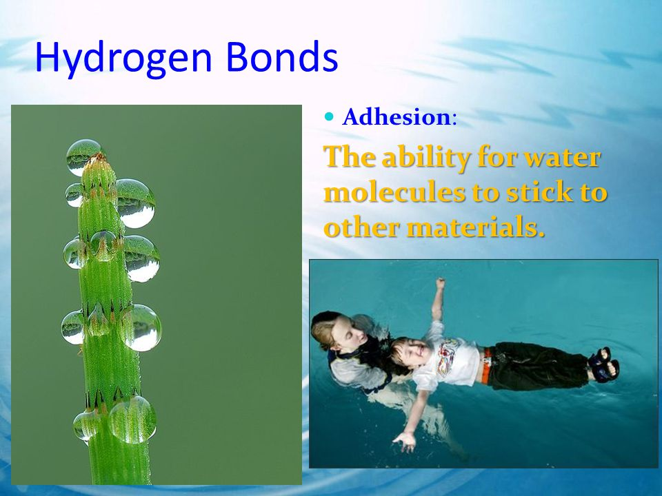 Hydrogen Bonds Adhesion: The ability for water molecules to stick to other materials.