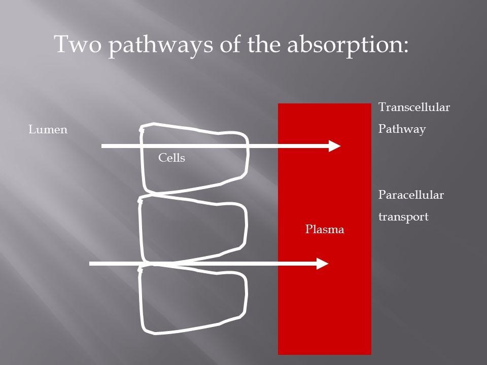 Two pathways of the absorption: Lumen Plasma Cells Transcellular Pathway Paracellular transport