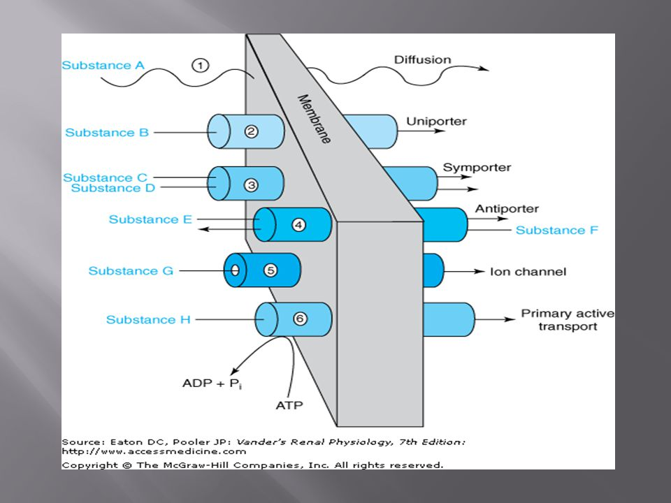  K + is major cation in cells and balance is essential for life.