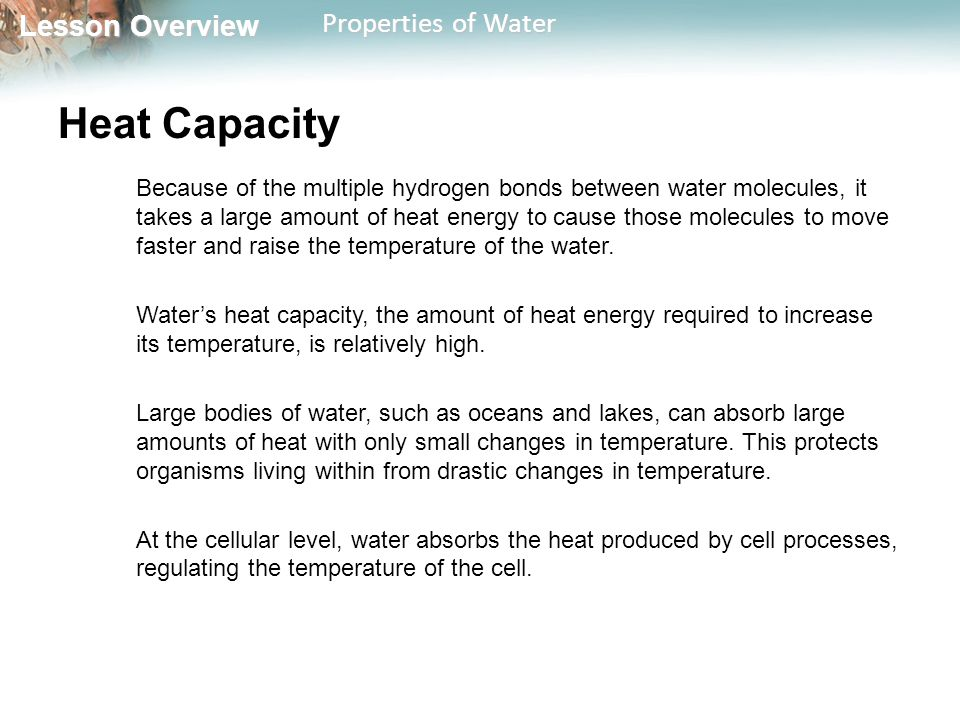 Lesson Overview Lesson Overview Properties of Water Heat Capacity Because of the multiple hydrogen bonds between water molecules, it takes a large amo