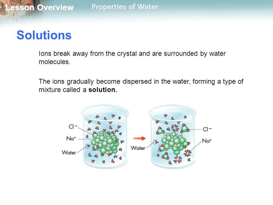 Lesson Overview Lesson Overview Properties of Water Solutions Ions break away from the crystal and are surrounded by water molecules. The ions gradual