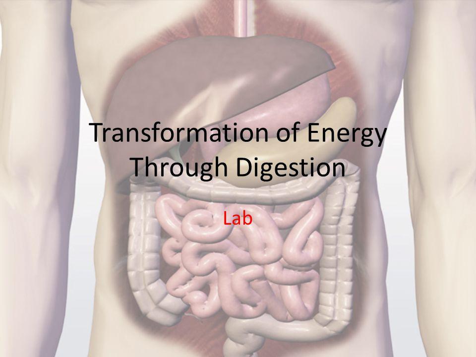Transformation of Energy Through Digestion Lab