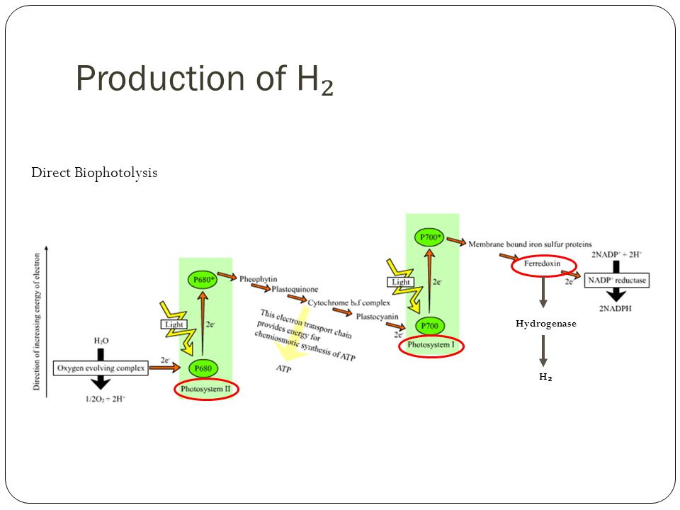 Production of H ₂ Hydrogenase H₂H₂ Direct Biophotolysis