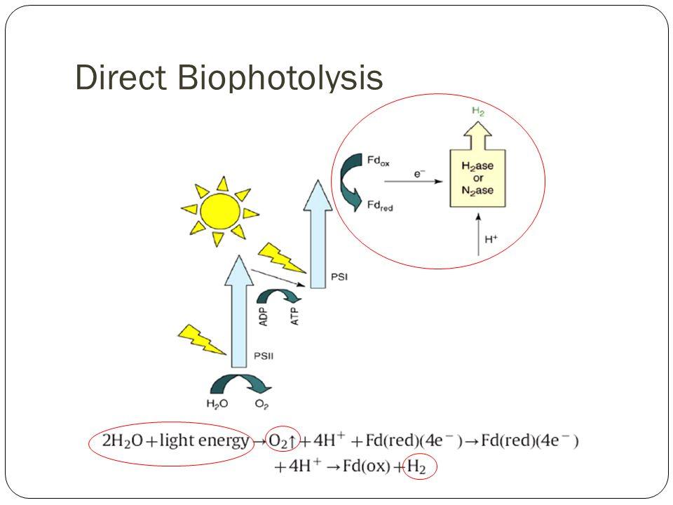 Direct Biophotolysis