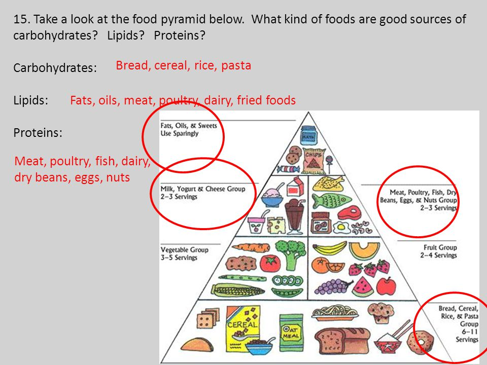 15. Take a look at the food pyramid below. What kind of foods are good sources of carbohydrates.