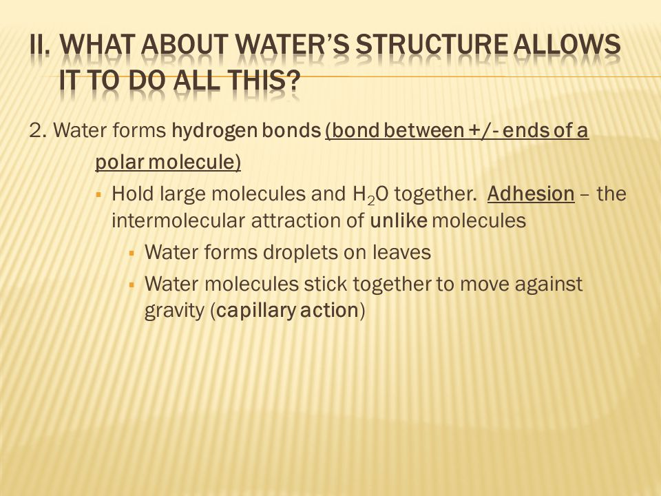 2. Water forms hydrogen bonds (bond between +/- ends of a polar molecule)  Hold large molecules and H 2 O together. Adhesion – the intermolecular att