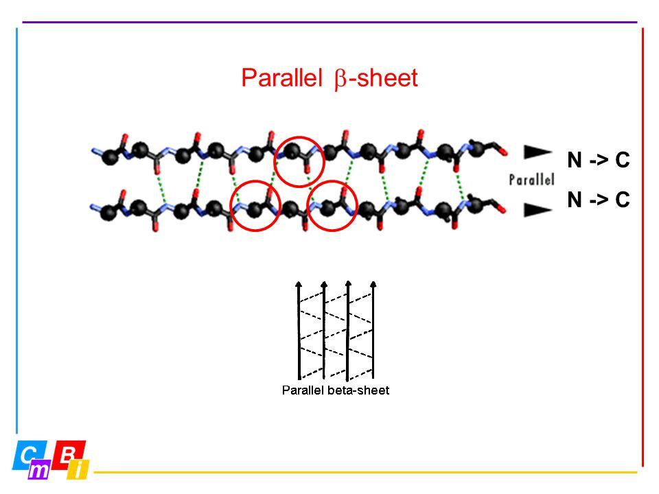 Parallel  -sheet N -> C