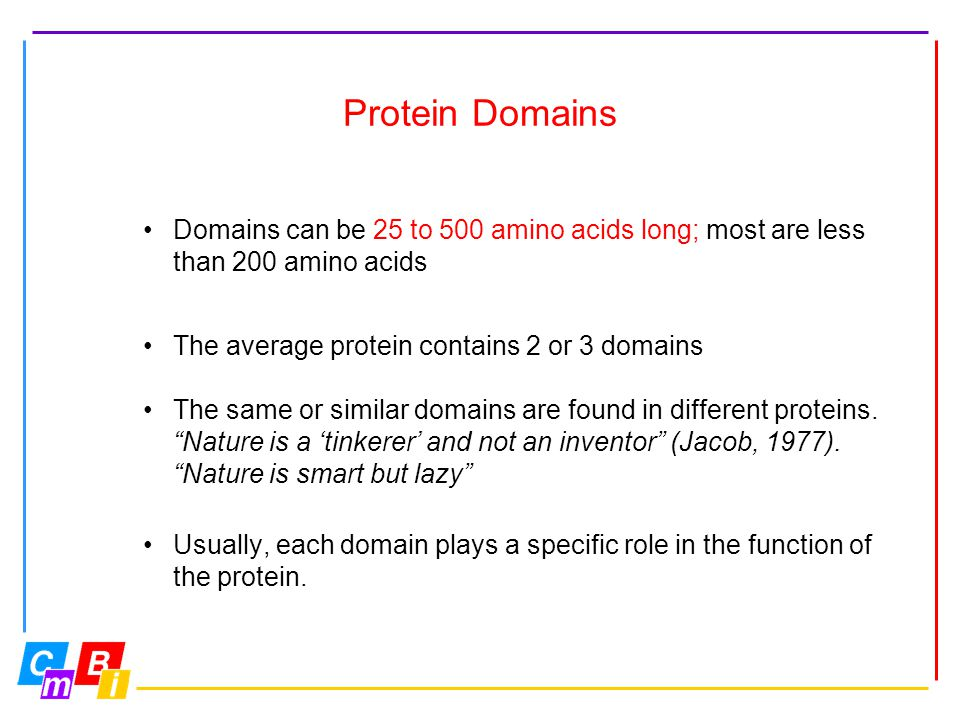 Protein Domains Domains can be 25 to 500 amino acids long; most are less than 200 amino acids The average protein contains 2 or 3 domains The same or