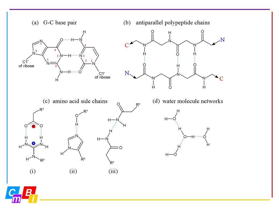 Hydrogen Bonds (2)
