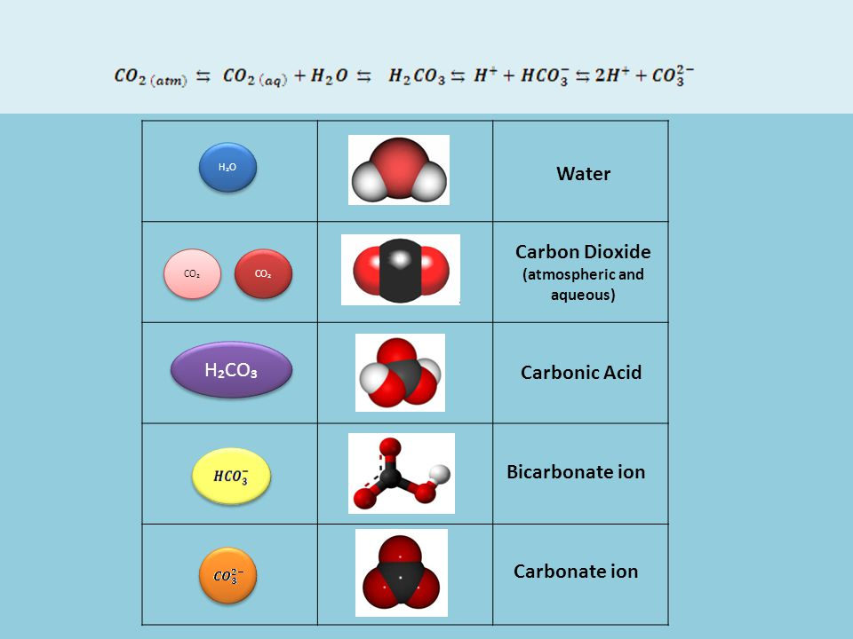 CO₂ H₂O H₂CO₃ Water Carbon Dioxide (atmospheric and aqueous) Carbonic Acid Bicarbonate ion Carbonate ion CO₂