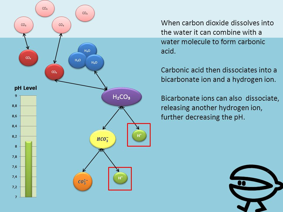 H⁺ CO₂ H₂O H₂CO₃ When carbon dioxide dissolves into the water it can combine with a water molecule to form carbonic acid. Carbonic acid then dissociat