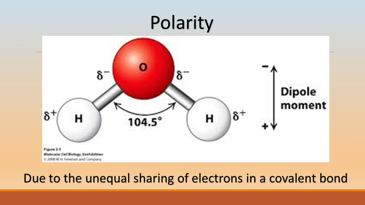 Polarity Due to the unequal sharing of electrons in a covalent bond
