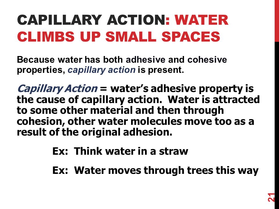 CAPILLARY ACTION: WATER CLIMBS UP SMALL SPACES Because water has both adhesive and cohesive properties, capillary action is present.
