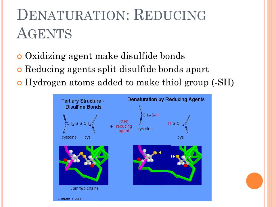 D ENATURATION : R EDUCING A GENTS Oxidizing agent make disulfide bonds Reducing agents split disulfide bonds apart Hydrogen atoms added to make thiol
