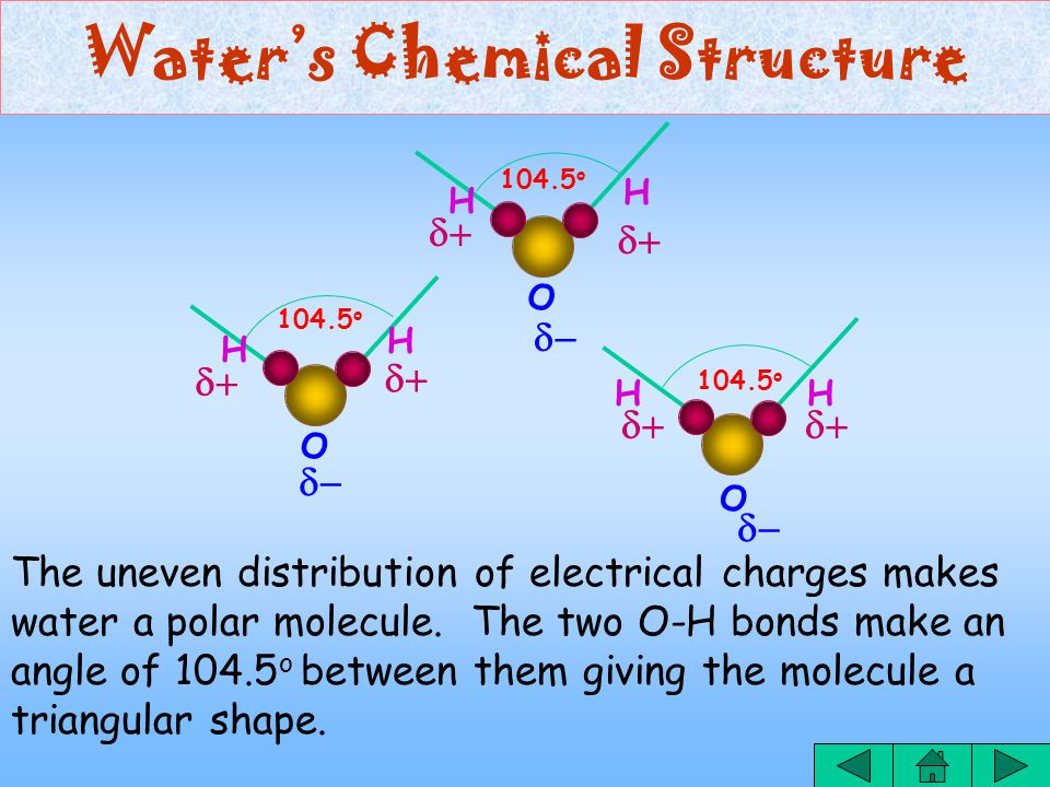 Water's Chemical Structure The oxygen atom attracts the electrons shared with hydrogen atoms more strongly to itself.