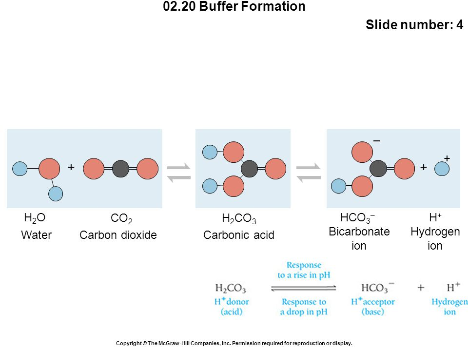 02.20 Buffer Formation Slide number: 4 Copyright © The McGraw-Hill Companies, Inc.