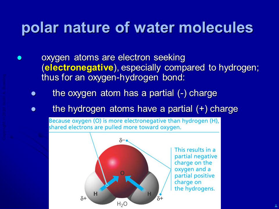Copyright  2010 Scott A. Bowling. polar nature of water molecules oxygen atoms are electron seeking (electronegative), especially compared to hydroge