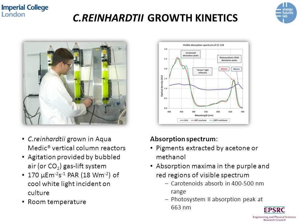C.REINHARDTII GROWTH KINETICS C.reinhardtii grown in Aqua Medic® vertical column reactors Agitation provided by bubbled air (or CO 2 ) gas-lift system 170 μEm -2 s -1 PAR (18 Wm -2 ) of cool white light incident on culture Room temperature Absorption spectrum: Pigments extracted by acetone or methanol Absorption maxima in the purple and red regions of visible spectrum –Carotenoids absorb in 400-500 nm range –Photosystem II absorption peak at 663 nm