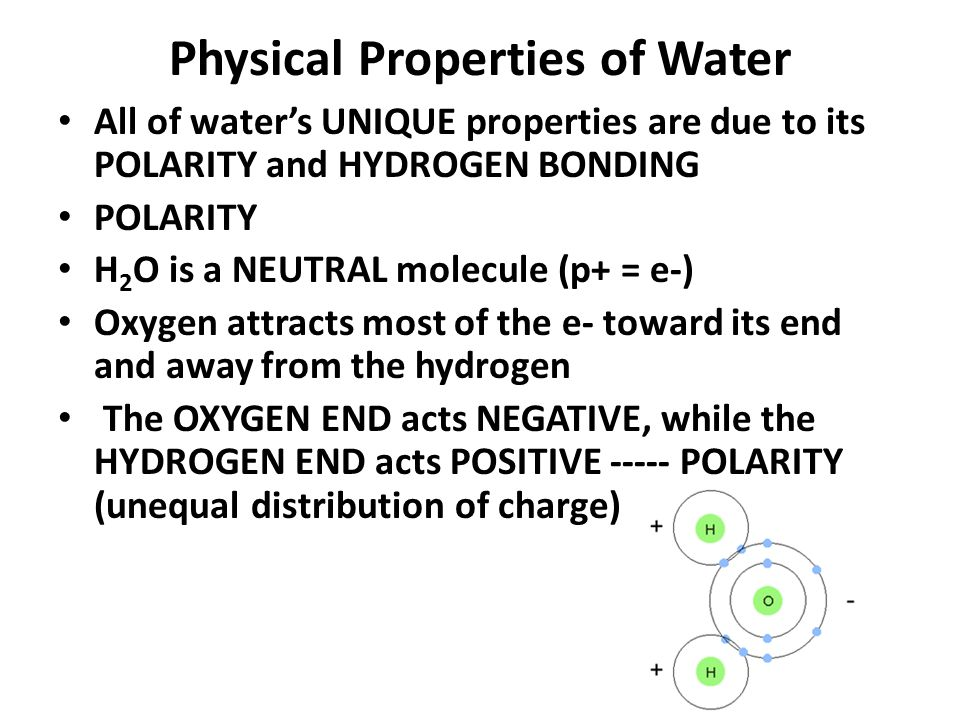 Physical Properties of Water All of water's UNIQUE properties are due to its POLARITY and HYDROGEN BONDING POLARITY H 2 O is a NEUTRAL molecule (p+ = e-) Oxygen attracts most of the e- toward its end and away from the hydrogen The OXYGEN END acts NEGATIVE, while the HYDROGEN END acts POSITIVE ----- POLARITY (unequal distribution of charge)