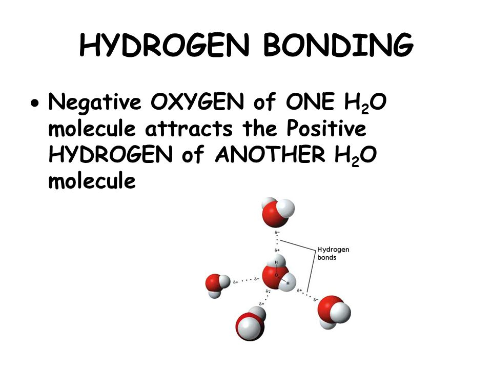 HYDROGEN BONDING  Negative OXYGEN of ONE H 2 O molecule attracts the Positive HYDROGEN of ANOTHER H 2 O molecule