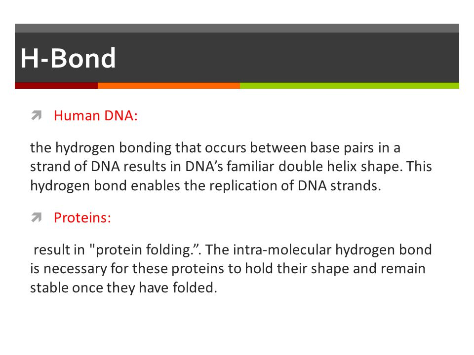H-Bond  Human DNA: the hydrogen bonding that occurs between base pairs in a strand of DNA results in DNA's familiar double helix shape. This hydrogen