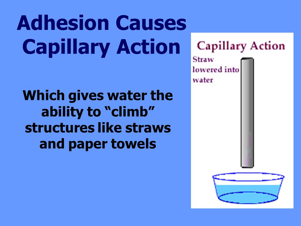Adhesion Causes Capillary Action Which gives water the ability to climb structures like straws and paper towels