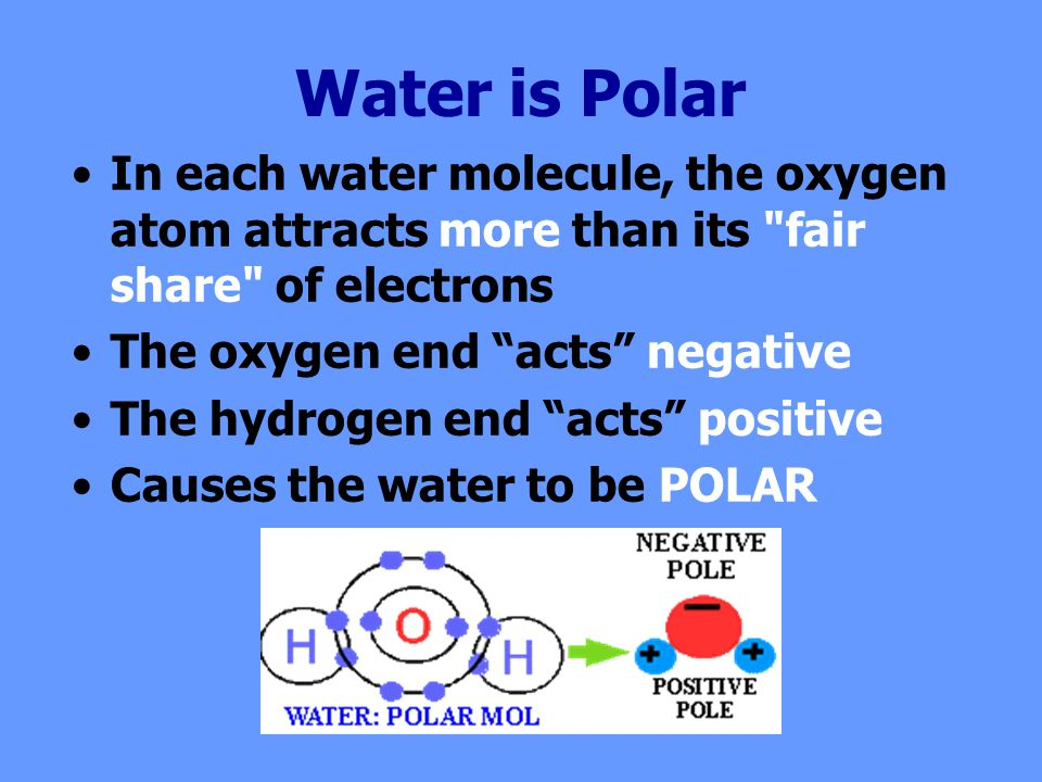 Water is Polar In each water molecule, the oxygen atom attracts more than its fair share of electrons The oxygen end acts negative The hydrogen end acts positive Causes the water to be POLAR