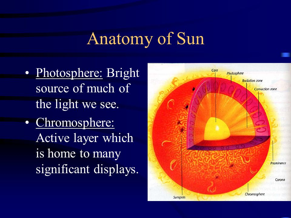 Anatomy of Sun Photosphere: Bright source of much of the light we see.
