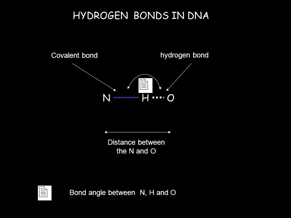 HYDROGEN BONDS IN DNA NHO Distance between the N and O Covalent bond hydrogen bond Bond angle between N, H and O