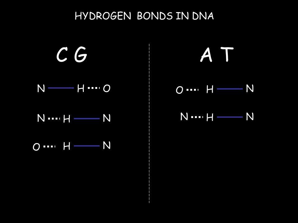 NHO HYDROGEN BONDS IN DNA N H N H N O C GA T H N O N H N