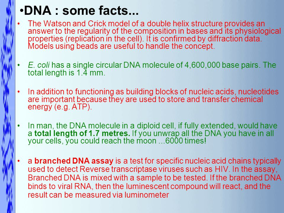 DNA : some facts...