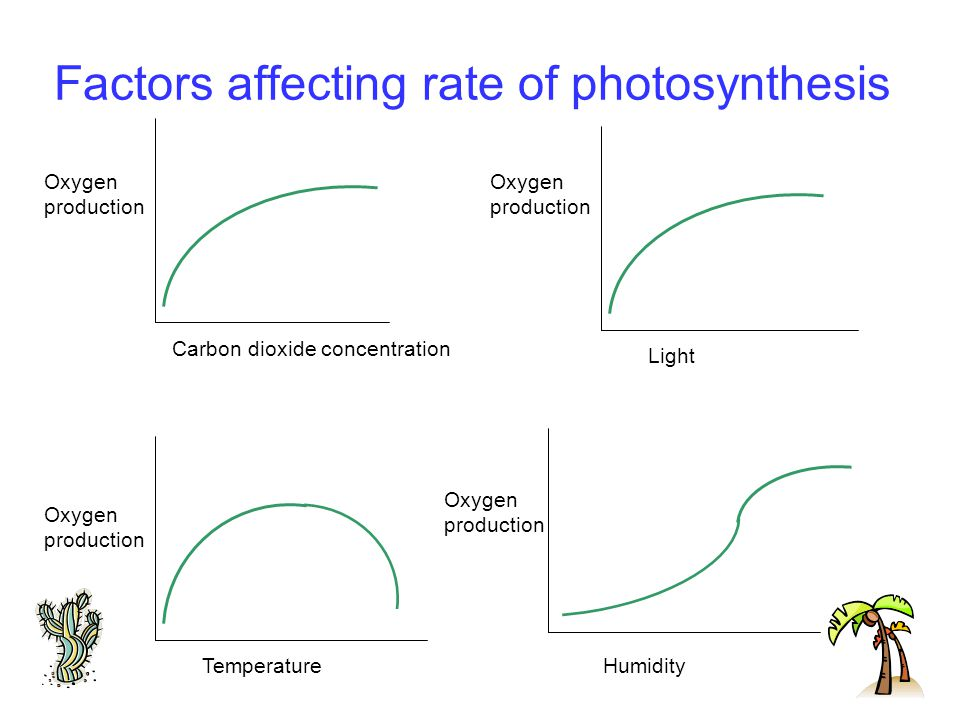 Factors affecting rate of photosynthesis Carbon dioxide concentration Temperature Oxygen production Light Oxygen production Oxygen production Oxygen production Humidity