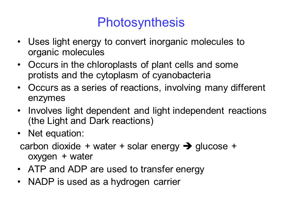 Photosynthesis Uses light energy to convert inorganic molecules to organic molecules Occurs in the chloroplasts of plant cells and some protists and the cytoplasm of cyanobacteria Occurs as a series of reactions, involving many different enzymes Involves light dependent and light independent reactions (the Light and Dark reactions) Net equation: carbon dioxide + water + solar energy  glucose + oxygen + water ATP and ADP are used to transfer energy NADP is used as a hydrogen carrier