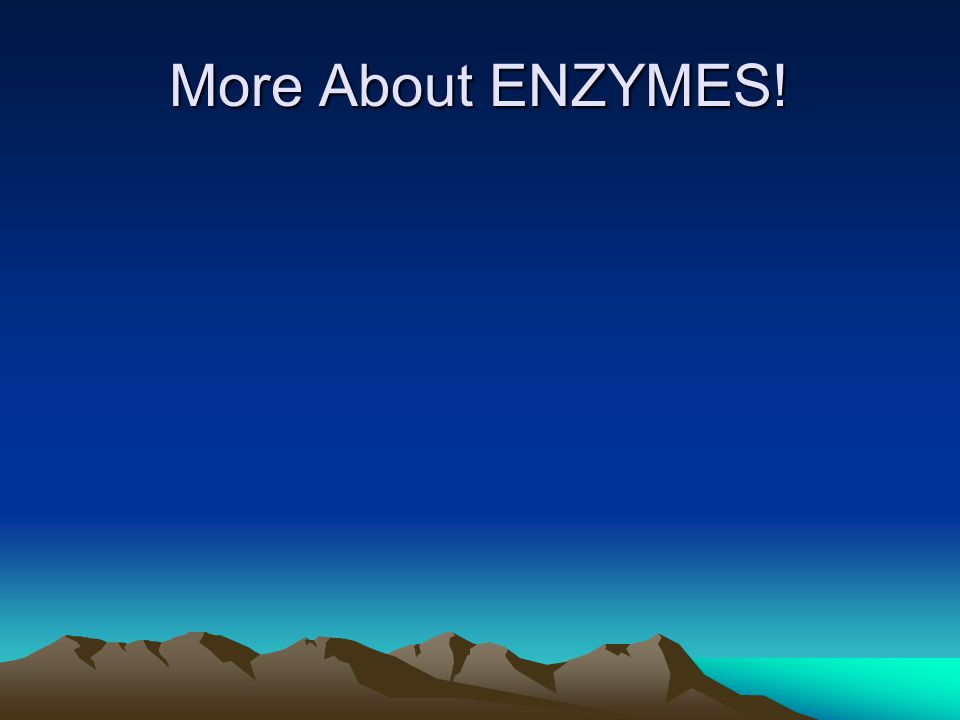 More About ENZYMES!