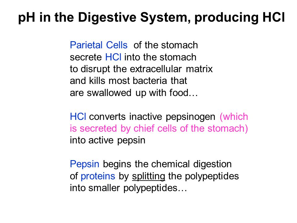 Parietal Cells of the stomach secrete HCl into the stomach to disrupt the extracellular matrix and kills most bacteria that are swallowed up with food
