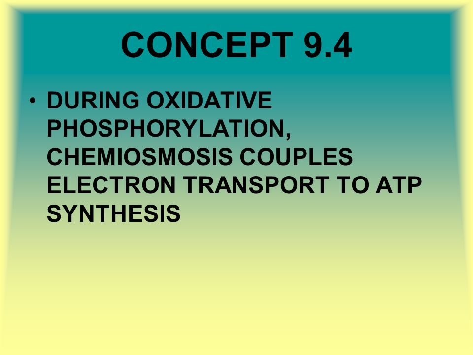 CONCEPT 9.4 DURING OXIDATIVE PHOSPHORYLATION, CHEMIOSMOSIS COUPLES ELECTRON TRANSPORT TO ATP SYNTHESIS