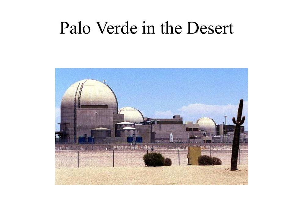 Palo Verde in the Desert