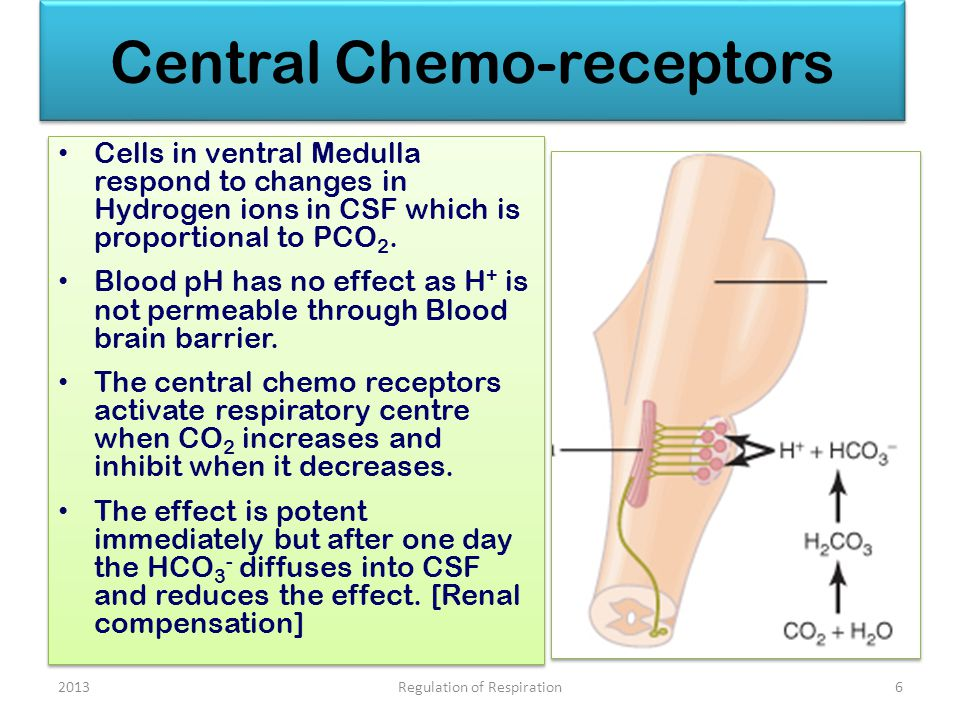 Central Chemo-receptors Cells in ventral Medulla respond to changes in Hydrogen ions in CSF which is proportional to PCO 2.