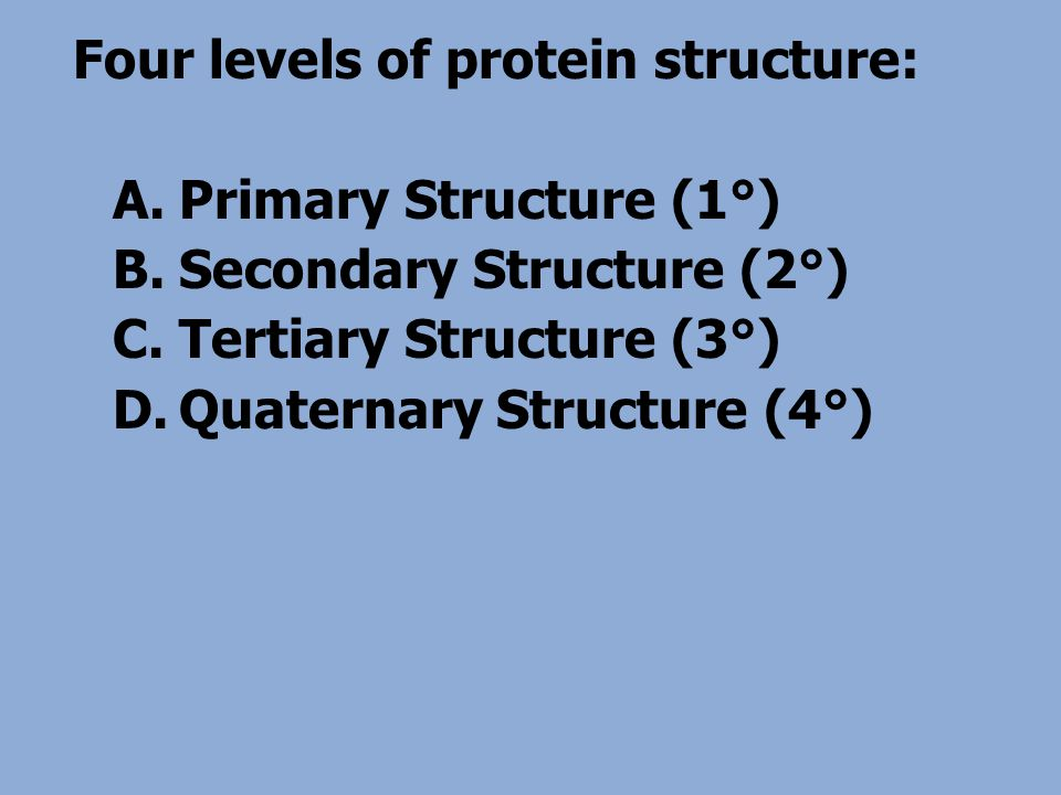 Four levels of protein structure: A.Primary Structure (1°) B.Secondary Structure (2°) C.Tertiary Structure (3°) D.Quaternary Structure (4°)