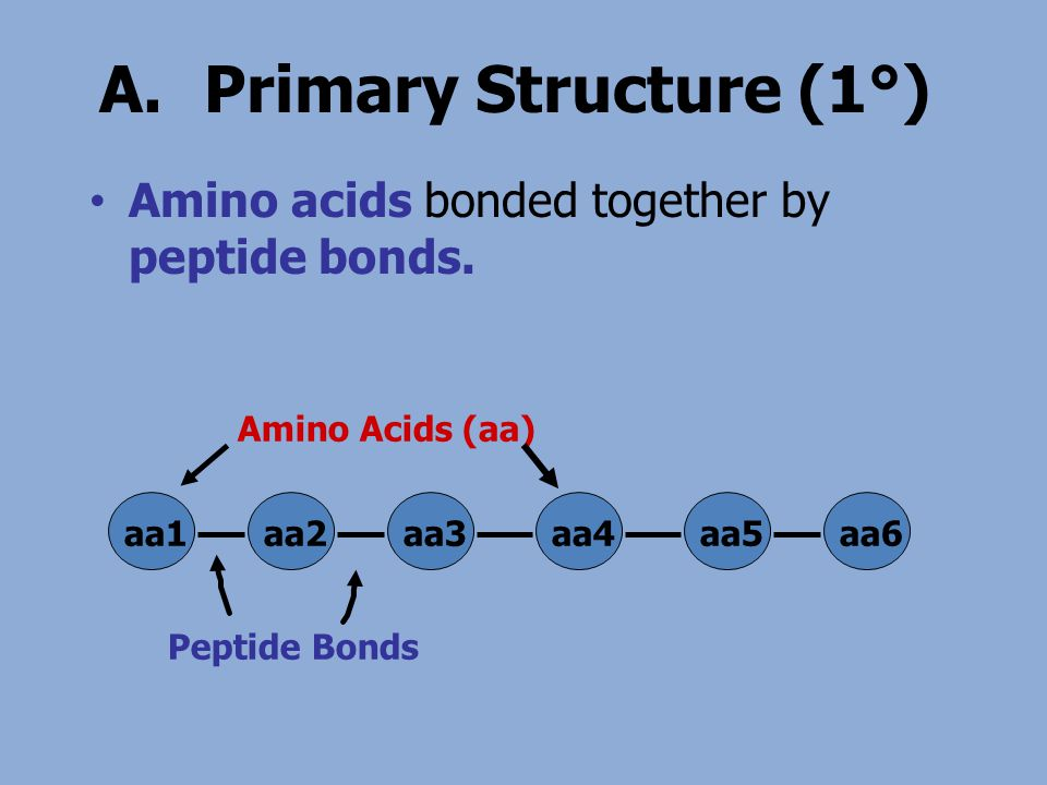 A.Primary Structure (1°) Amino acids bonded together by peptide bonds. aa1aa2aa3aa4aa5aa6 Peptide Bonds Amino Acids (aa)