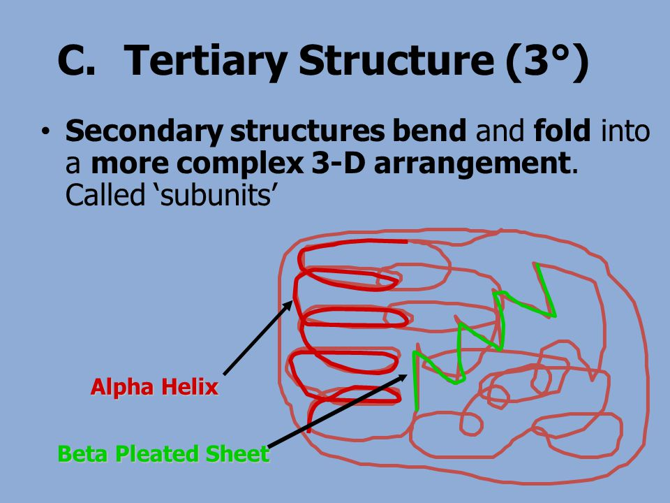 C.Tertiary Structure (3°) Secondary structures bend and fold into a more complex 3-D arrangement. Called 'subunits' Alpha Helix Beta Pleated Sheet