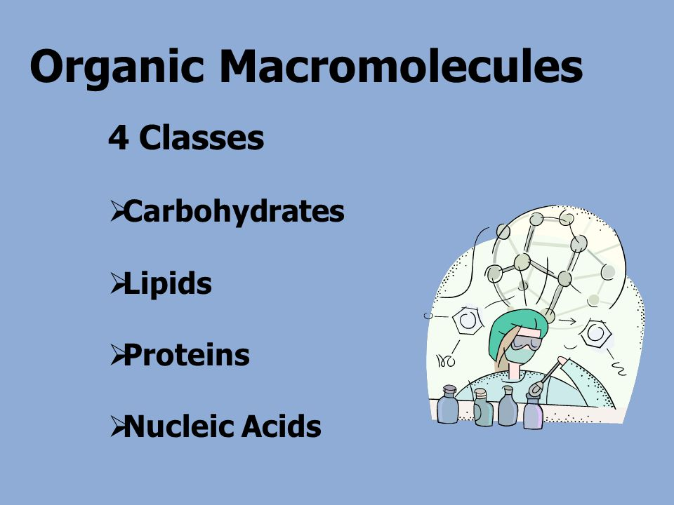 Organic Macromolecules 4 Classes  Carbohydrates  Lipids  Proteins  Nucleic Acids