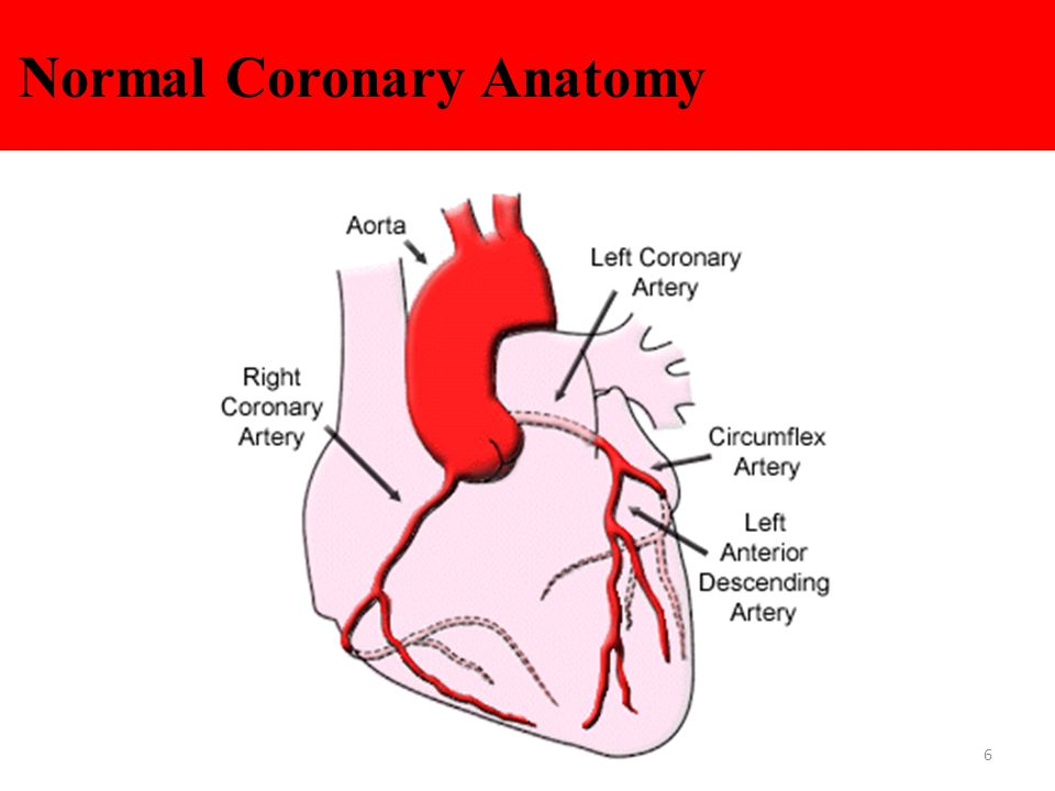 Normal Coronary Anatomy 6
