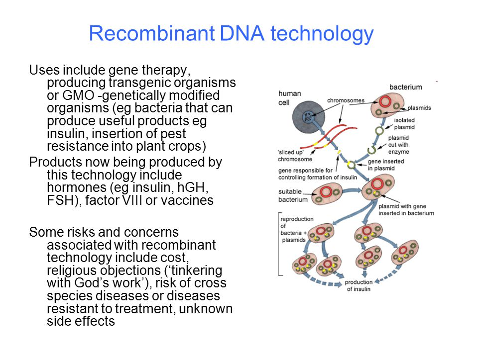 Recombinant DNA technology Uses include gene therapy, producing transgenic organisms or GMO -genetically modified organisms (eg bacteria that can produce useful products eg insulin, insertion of pest resistance into plant crops) Products now being produced by this technology include hormones (eg insulin, hGH, FSH), factor VIII or vaccines Some risks and concerns associated with recombinant technology include cost, religious objections ('tinkering with God's work'), risk of cross species diseases or diseases resistant to treatment, unknown side effects