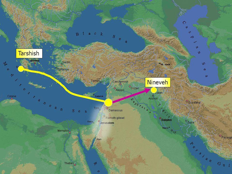 Nineveh Tarshish