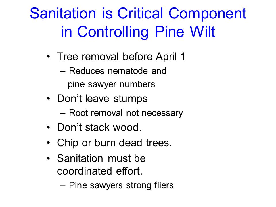 Sanitation is Critical Component in Controlling Pine Wilt Tree removal before April 1 –Reduces nematode and pine sawyer numbers Don't leave stumps –Ro