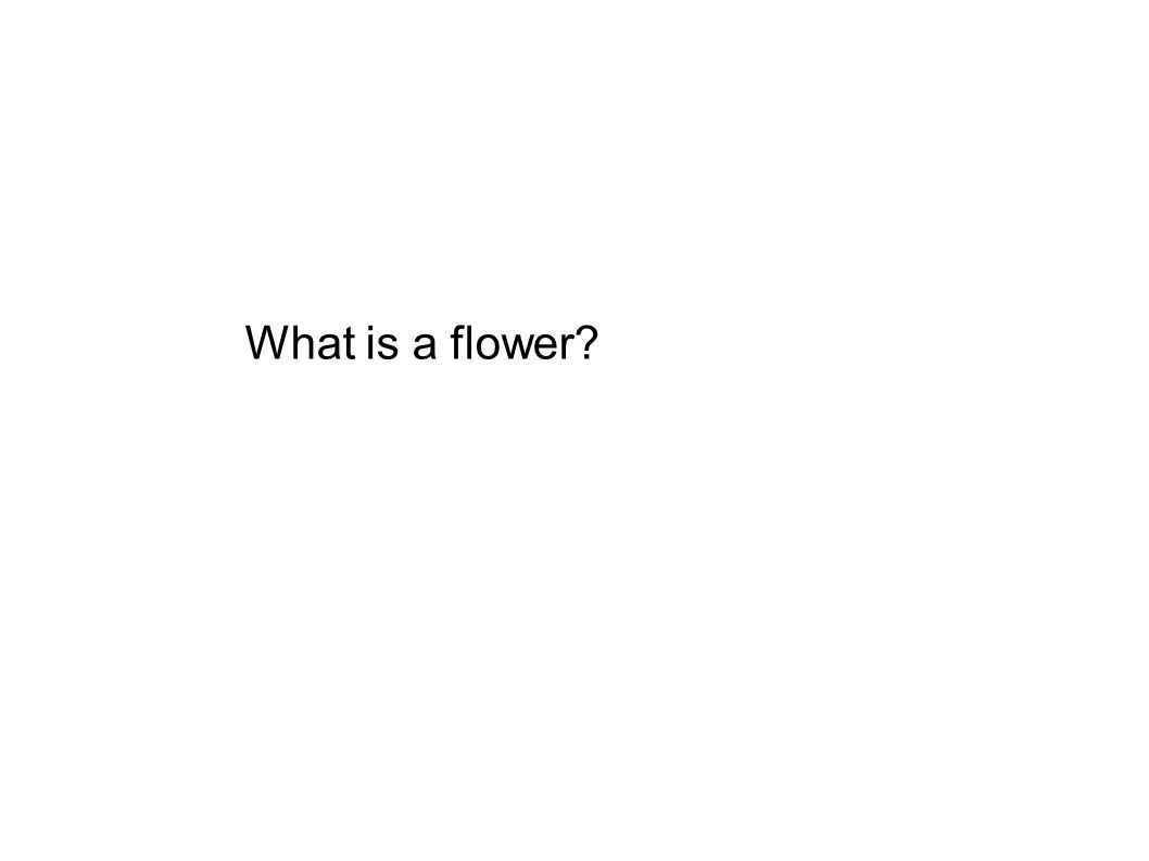 What is a flower?