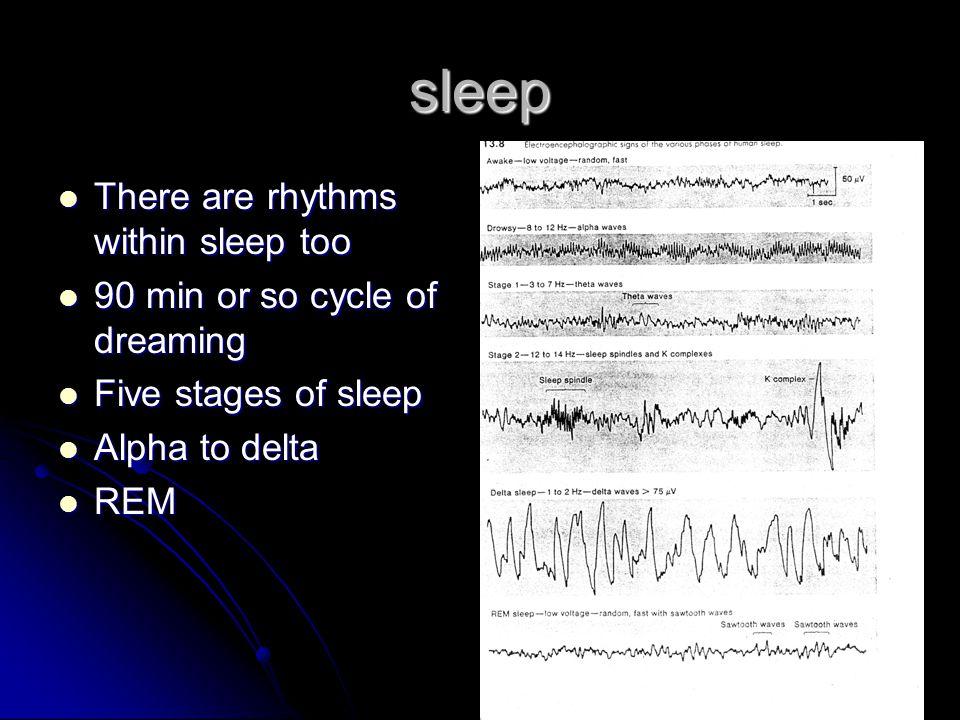 sleep There are rhythms within sleep too There are rhythms within sleep too 90 min or so cycle of dreaming 90 min or so cycle of dreaming Five stages