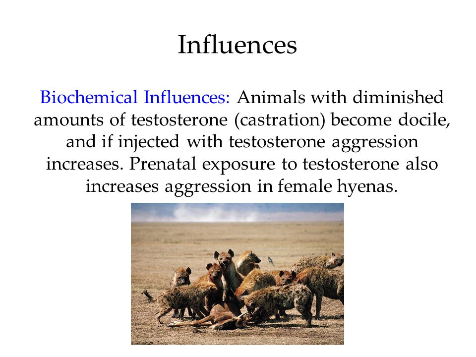 Influences Biochemical Influences: Animals with diminished amounts of testosterone (castration) become docile, and if injected with testosterone aggression increases.