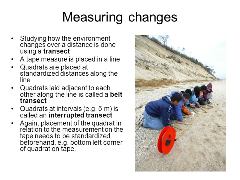 Measuring changes Studying how the environment changes over a distance is done using a transect A tape measure is placed in a line Quadrats are placed at standardized distances along the line Quadrats laid adjacent to each other along the line is called a belt transect Quadrats at intervals (e.g.